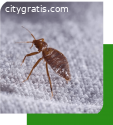 Bed Bugs Control Adelaide