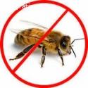 Bees Control Moreton Bay