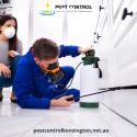 Best Pest Control Kensington Treatment