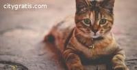 Buy Cat Litter Online
