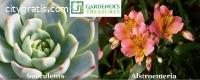 Buy Plants Online in Australia
