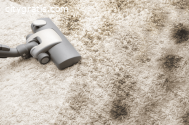 Carpet Pet Stain Removal Services
