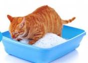 Cat Litter Manufacturer