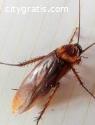 Cockroach Control Dunlop