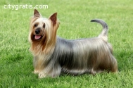 Dog Grooming Services North Brisbane