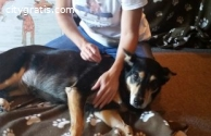 Dog Training in Perth - Call Now || 0 86