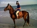 Equitazione a Salalah