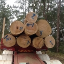 Experience Hassle-Free Timber Logging