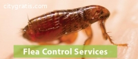 Flea Control Adelaide