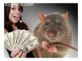 MAGIC RATS THAT BRINGS CASH +2778539292
