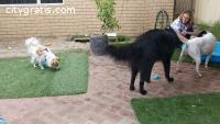 Natural Paws Holistic Pet Care - Ph. 61