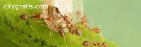 Pest Control Banks