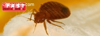 Pest Control Braddon