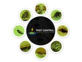 Pest Control Glebe