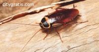 Pest Control Griffith