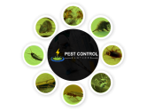 Pest Control Hawthorn