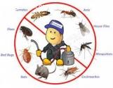Pest Control Jimboomba