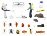 Pest Control Kyneto