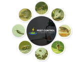 Pest Control Moonee Ponds