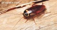 Pest Control Phillip