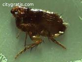 Pest Control Rye