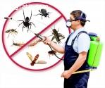 Pest Control San Antonio Texas