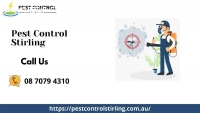Pest Control Services in Stirling, SA