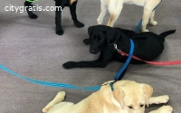 Puppy Day Care in Perth