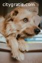 Senior Pet Health - Vets on Call