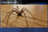 Spider Control Dickson