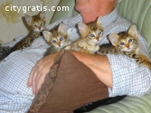 Tamed Caracals and serval kittens for sa