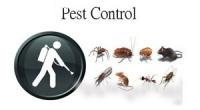 Termite Control Sunshine Coast