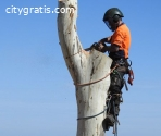 Tree Pruning Adelaide Hills