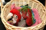 Baby parrots and eggs: incubators