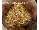Gold Nuggets for sale in South Africa
