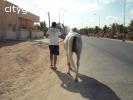 Horseback riding in Salalah, Oman