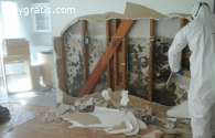Mold Inspection in California