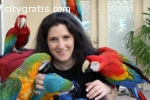 PARROT FOR SALE (macaws,African Gra