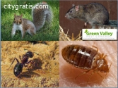 Eco-Friendly Pest Control in Vancouver