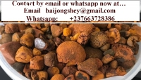 Gallstones(ox-cow) for sale