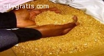 Gold Nuggets Price:36, 000 USD  per kg P