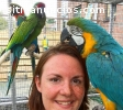 macaws, cockatoos, African greys and fe