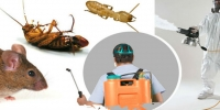 Schedule Pest Control Services Today!