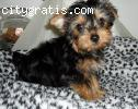 Adorable and cute puppies available