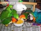 Fertile parrots eggs and parrots  Baby