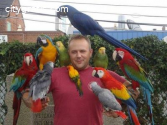macaw parrots, cockatoos, African grey p