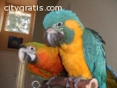 species of macaw baby parrot for sale