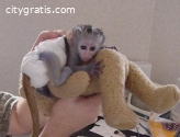 Squirrel monkeys,Capuchin monkeys,Spider
