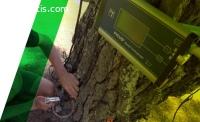 Arboricultural Evaluation Auckland