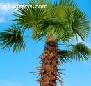 Best Palm Tree Removal Service